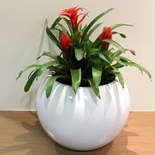 frenchams indoor plant hire office plants plant rental