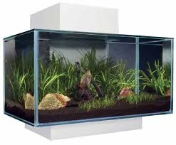 fluval edge coldwater aquariums