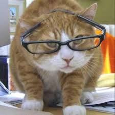 a curious cat with glasses