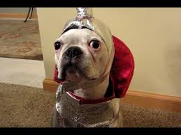funny dogs wearing costumes compilation 2013 youtube