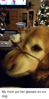 Dog With Glasses Meme - my mom put her glasses on our dog glasses meme on esmemes com