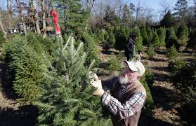 recent rains mean better trees for christmas breaking news