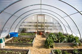 garden greenhouse ideas 25 best ideas about greenhouse panels on pinterest hoop house with