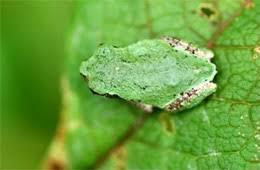 edupic amphibian images