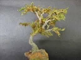 quicktips 3 miniature tree