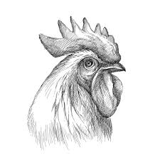 vector sketch of rooster or head profile in black isolated on
