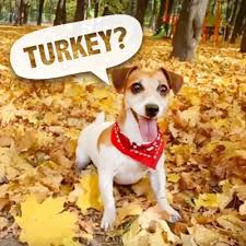 thanksgiving ecards send online thanksgiving cards at american