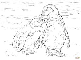 two african penguins coloring page free printable coloring pages