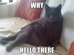 Hello Meme Funny - why hello there seductive cat quickmeme