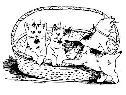 coloring kitten basket
