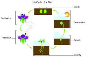 the life cycle of plants my cyberwall