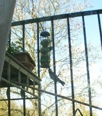 apartment bird feeding u0026 clean up feeding garden visitors