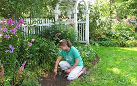 how to care for bulbs u0026 perennials if you can u0027t plant right away