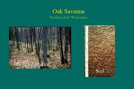 Wisconsin vegetaion images The soil resource foundation of terrestrial ecosystems ppt jpg