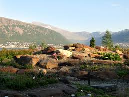 native and adapted landscape plants alpine plant info u2013 using alpine plants in the landscape
