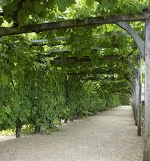 incredible ideas to make your garden trellis stand apart