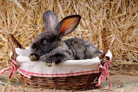 bunny basket bunny in basket stock image image of puppy 35739867