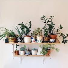 home decor with plants home decor plants living room how to best 25 plant shelves ideas