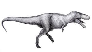 tyrannosaurus rex information and gallery