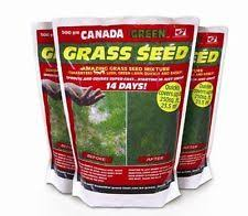 ornamental grasses ebay