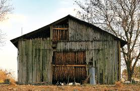 Old Barn Photos The Story Of Tobacco Barns In North Carolina U2013 Our State Magazine