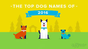 state with most dog owners 2016 top 100 male and female dog names by breed gender city and more