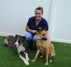 needham animal hospital veterinarian in wilmington nc usa