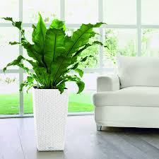 Self Watering Lechuza White All In One Cubico Cottage Self Watering Planter