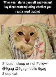 Sleepy Cat Meme - 25 best memes about sleeping cats sleeping cats memes