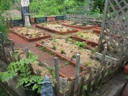 Front Yard Vegetable Garden Ideas Fall Front Yard Vegetable Garden Design Basic Vegetable Garden