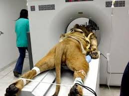 image of the who got a cat scan business insider