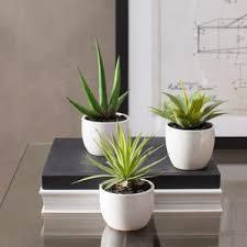 Small Desk Plants by Indoor Desk Top Plants You U0027ll Love Wayfair