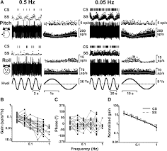 what is 138 311 as a percent relationship between complex and simple spike activity in macaque
