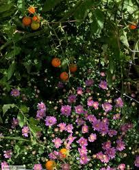 the smart garden the smart garden sierra news online
