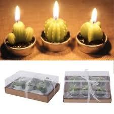 how long do tea lights burn 12pcs cactus tealight candle long burning succulents tea light