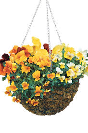 pansies u0026 viola gardens southern living