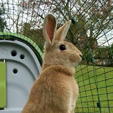 classic rabbit eglu classic rabbit hutch rabbit products omlet