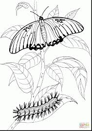 fabulous very hungry caterpillar coloring pages printables with