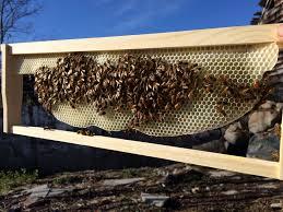beekeeping equipment decisions kenyan top bar hive part 1