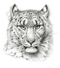 snow leopard sketch portrait by sschukina on deviantart