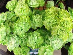 green dyed carnations a florist u0027s dream pinterest