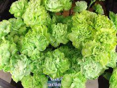 green dyed carnations a florist u0027s dream pinterest