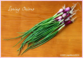 what is spring spring onion nutrition calories growing benefits and uses