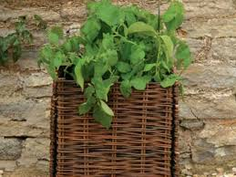 beginners vegetable growing kits