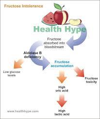top diet foods hypoglycemic diet food list