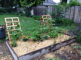 garden trellises with butternut squash climbing garden covered