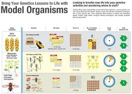 infographic bring your genetics lessons to life with model