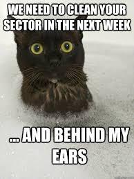 Clean Cat Memes - clean buisness cat memes quickmeme