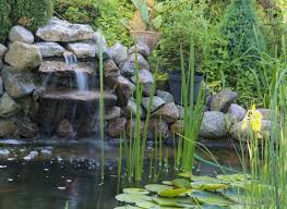 Types Of Fish For Garden Ponds - what are the different types of garden ponds with pictures