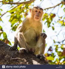 portrait of monkey on tree stock photo royalty free image